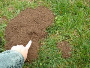 Gopher Control Removal